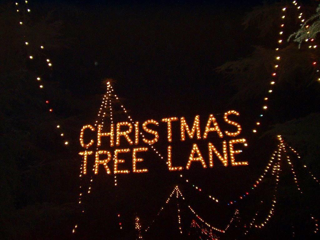 My LGBT Plus Christmas Tree Lane Walk!