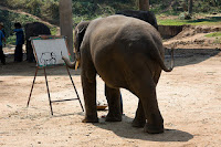 Contoh-Example of report text-Elephant animal