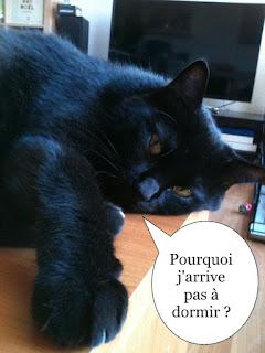Chatte noire sur un meuble essaie de dormir.