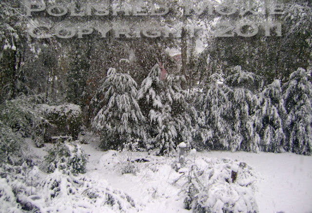 Picture of garden 3 hours into a snowstorm.