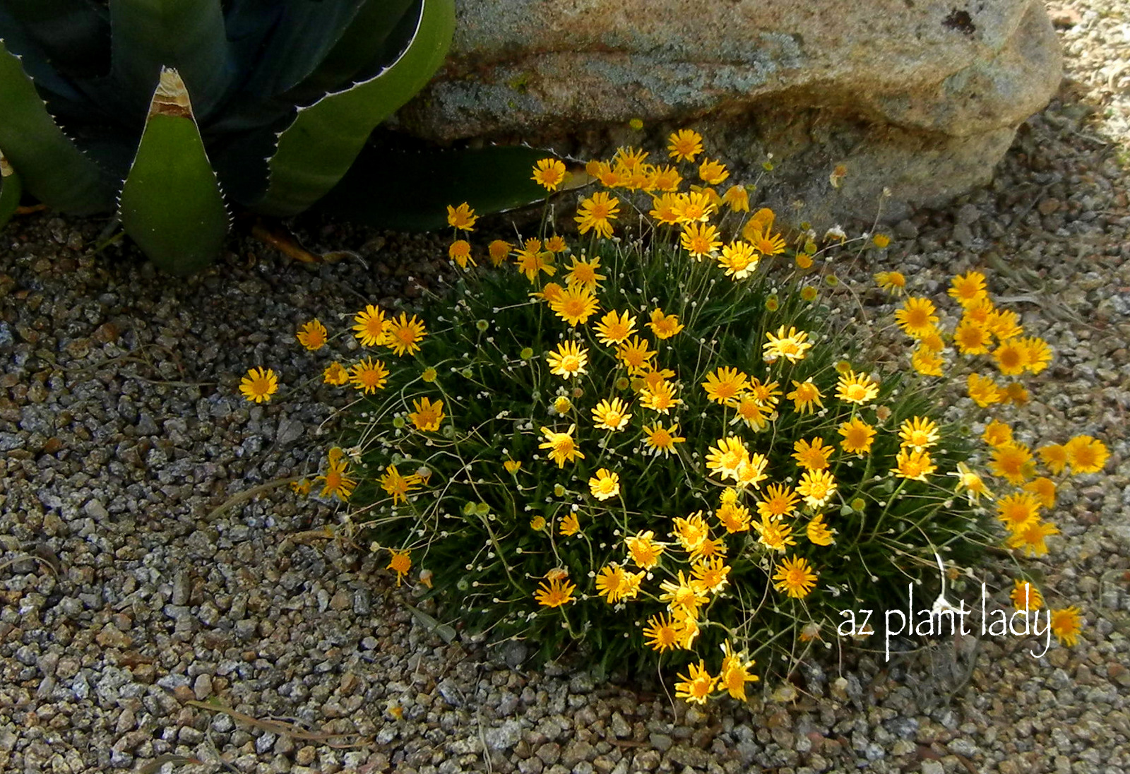 Fuss Free Plants For Fall Planting Ramblings From A