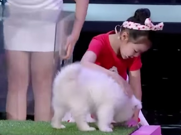 A menina chinesa que hipnotiza animais