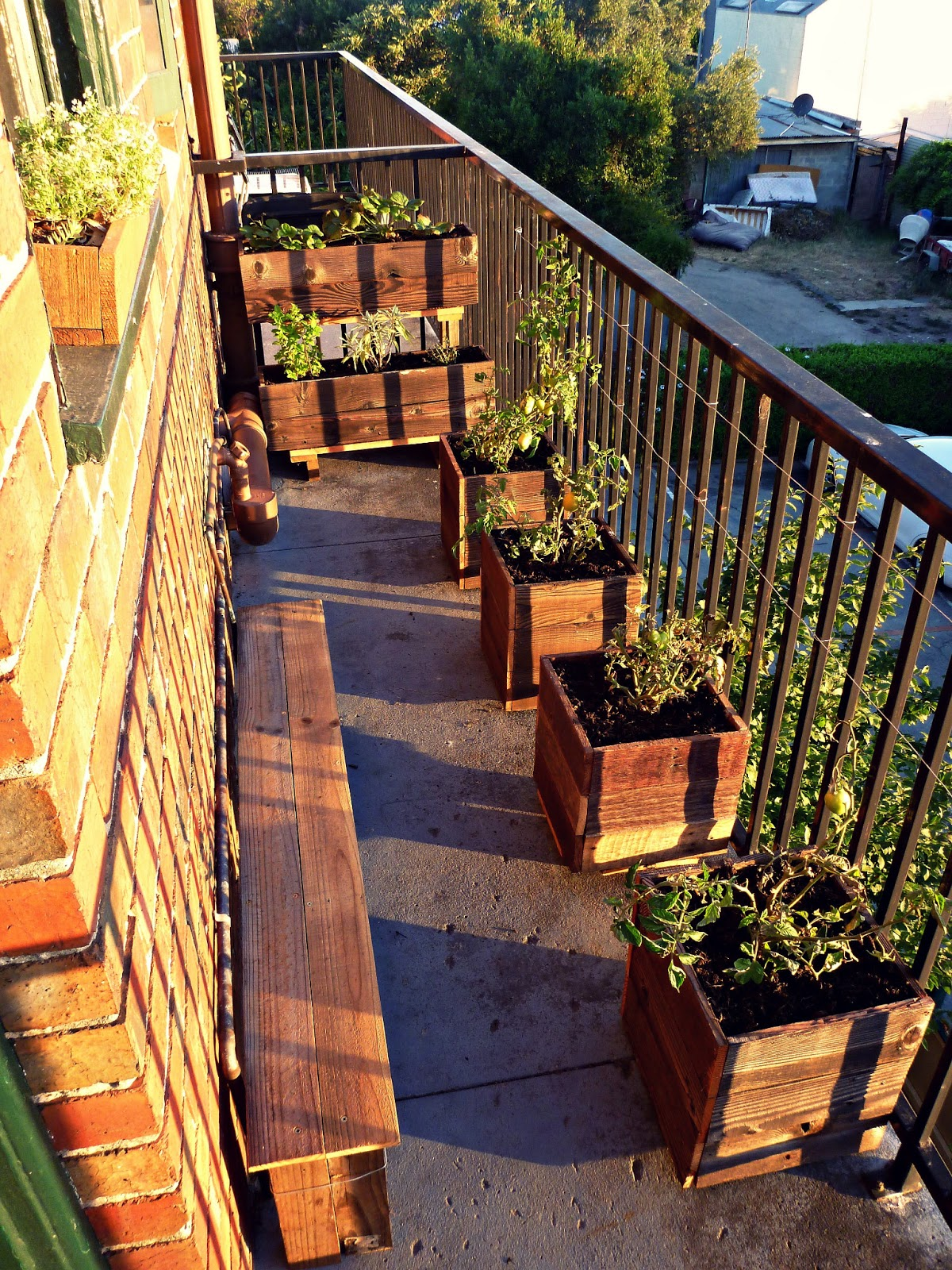 Urban growth my first garden balcony installation for Small balcony garden ideas pictures