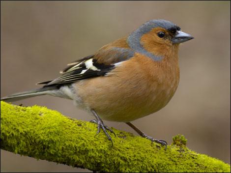 birds uk, Garden birds south africa, Garden birds poster, Garden birds ...  Birds