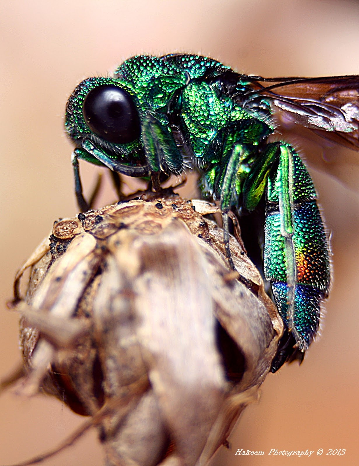 Metallic Green Wasp 2