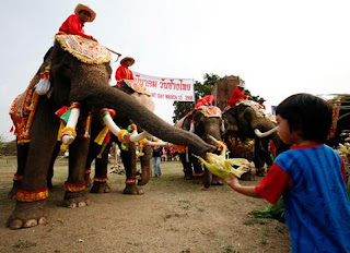 Amazing-Thailand-Elephant-Pictures-Images-Pics
