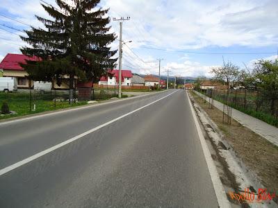 Copacei plantati pe marginea drumului