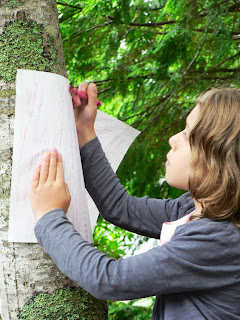 child making a bark rubbing on a maple tree