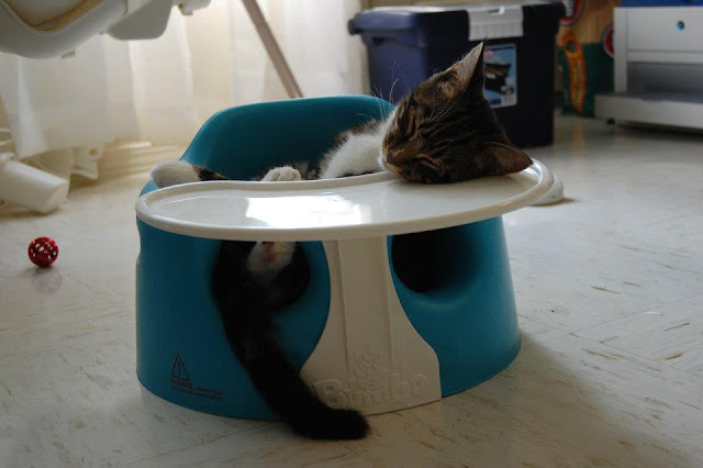 funny animals of the week, sleeping kitten
