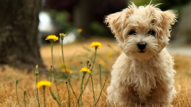 Lovely Dog Wallpaper
