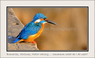 Common Blue Kingfisher, Ranthambore, Rajasthan, India