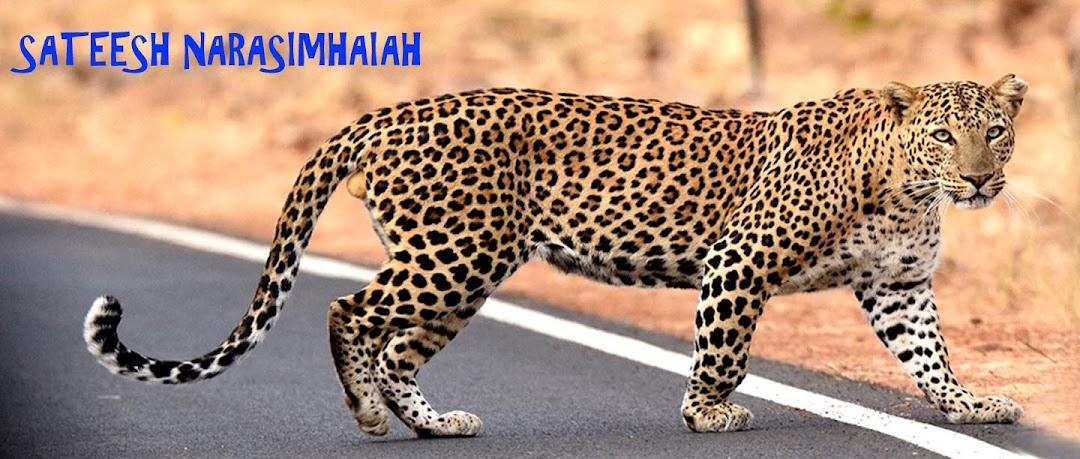 SATEESH NARASIMHAIAH