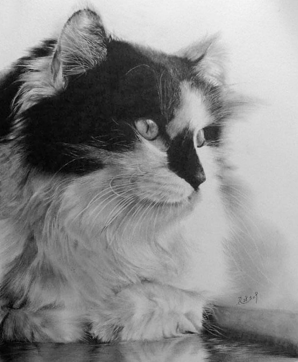 dibujos-gatos