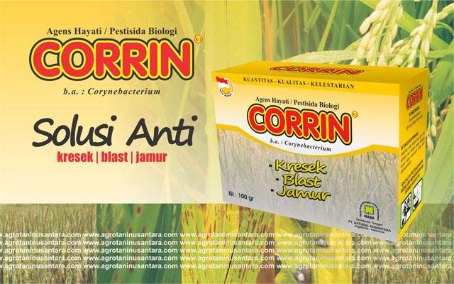 CORRIN Agens Hayati NASA untuk mencegah penyakit Kresek, Blast, Jamur pada Tanaman Padi | Pesan Sekarang Hubungi 081904091115 / 089618222877  | www.agrotaninusantara.com