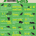 some interesting facts about cats