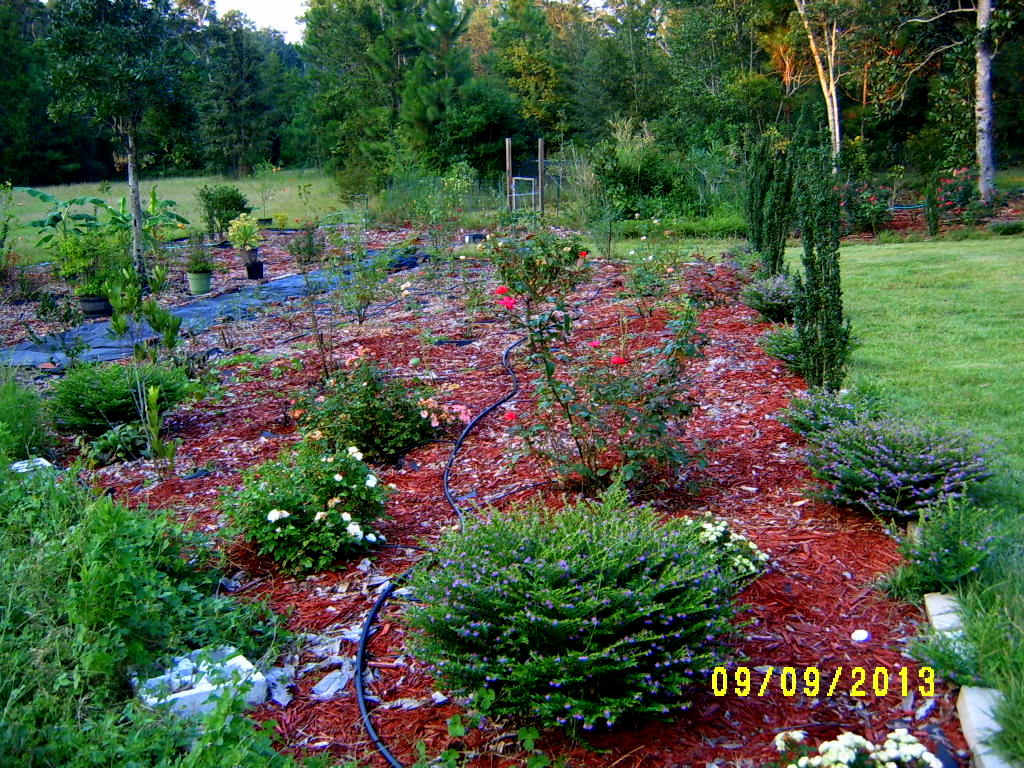 Alabama Rose And Flower Garden From A Non Green Thumb Journal Notes
