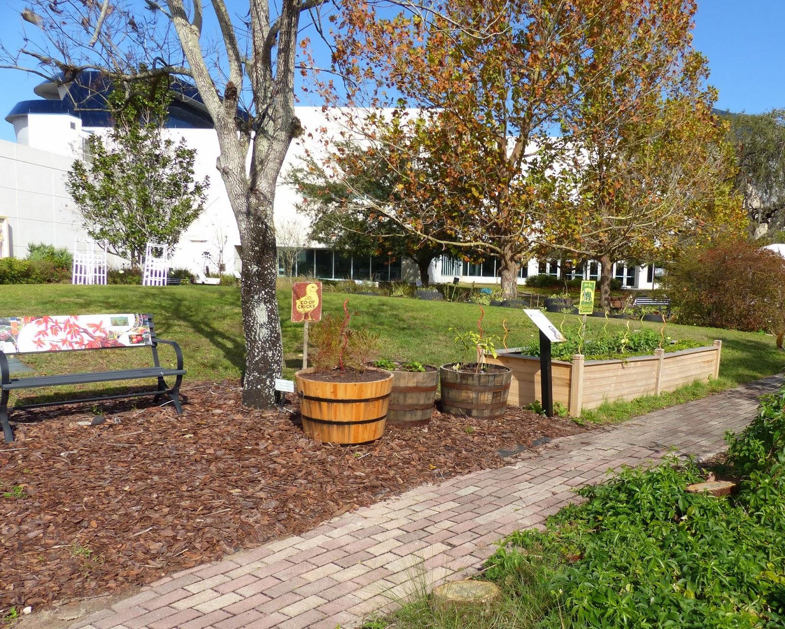 Historic Tree Grove: George Washington Carver Persimmon   MOSI Outside