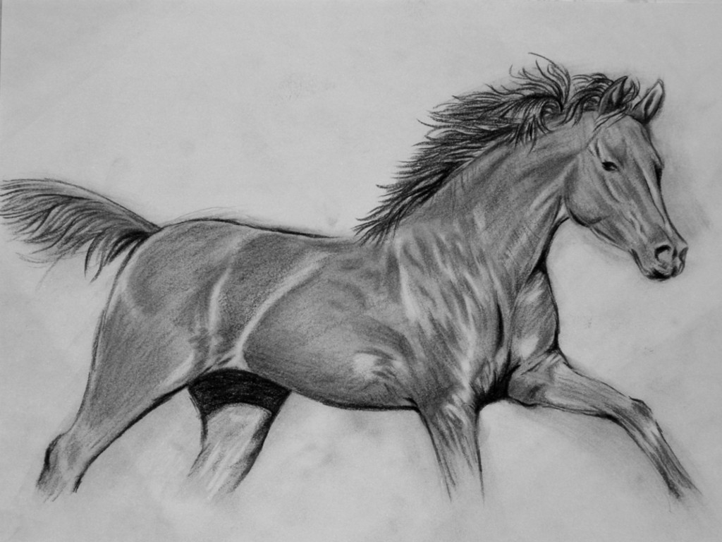 Black horse head drawing - photo#21