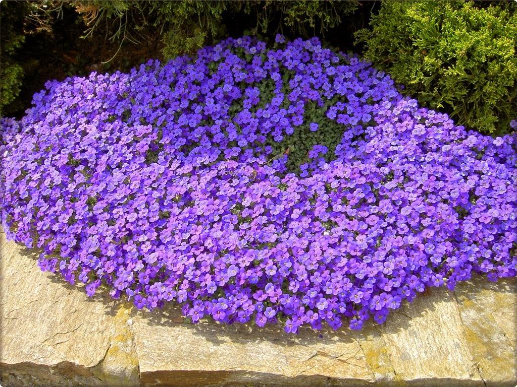 Koje cveće možete da posadite da ukrasite baštenske zidiće - Moj Vrt Cvijeća