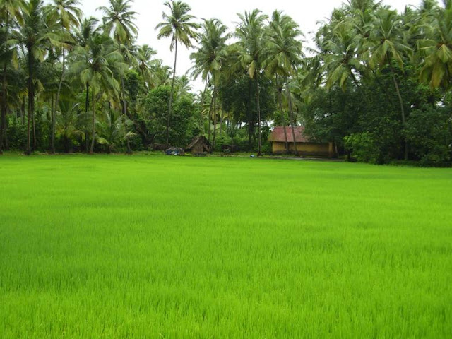 Beautiful Picture from Kerala Villages