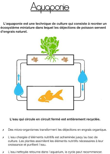 Schéma / B.ponics / aquaponie france / aquaponics