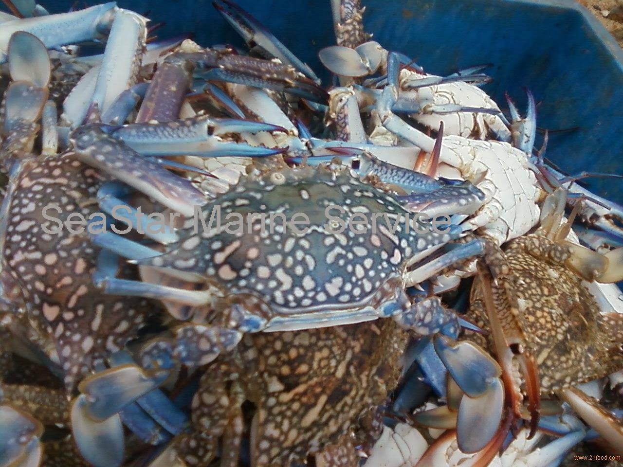 Mambulaoans worldwide buzz da dilg impose ban on blue crab for Blue crab fishing