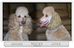 Dog Snoods for Long Eared Dogs such as Cavaliers, Basset Hounds, Spaniels,