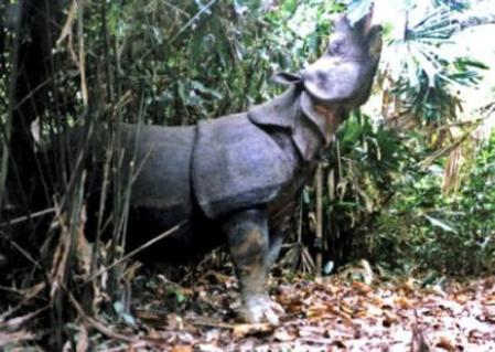 imagenes de animales raros del mundo - En Imágenes: ¿Serán estos los animales más raros del