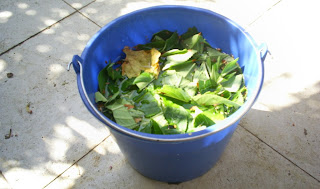 cubo para compostar
