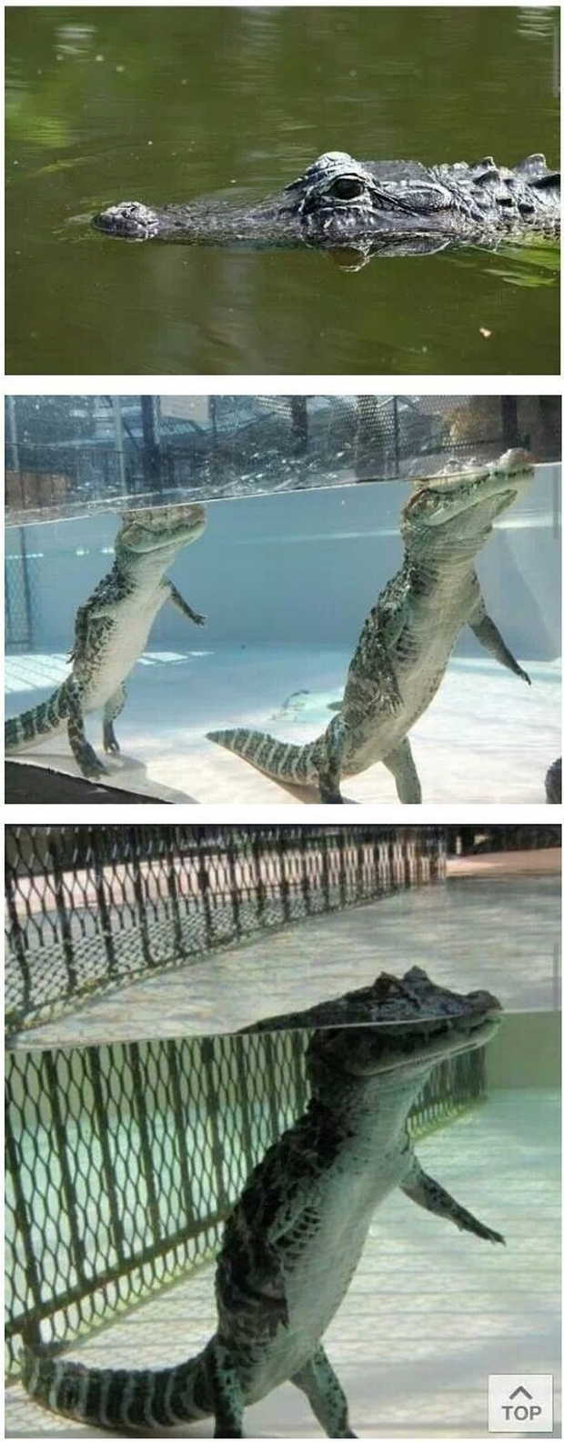 Funny animals of the week - 28 August 2015, funny animal, animal pictures, best animal pictures