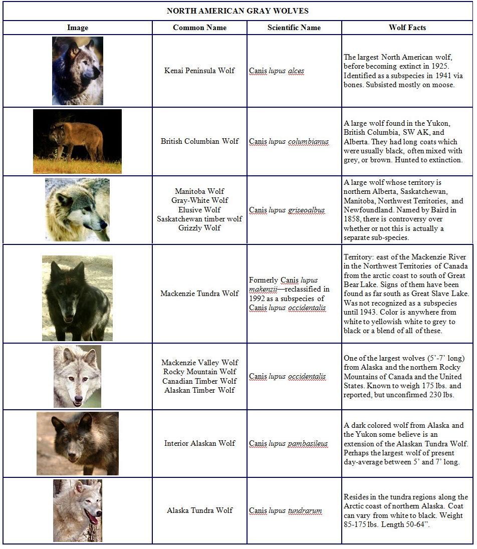 the symbolism of wolves and its influence on the elimination of gray wolf Cry, wolf by ella berven an gray wolves from the lower 48 states over a period of 25 years today many people are convinced that the elimination of the gray.