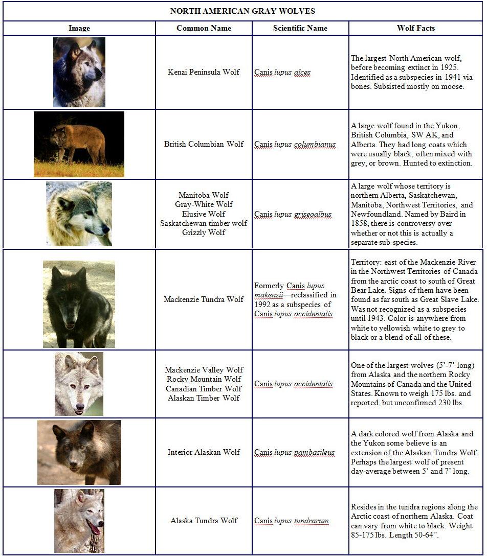 Species and Subspecies Sp001