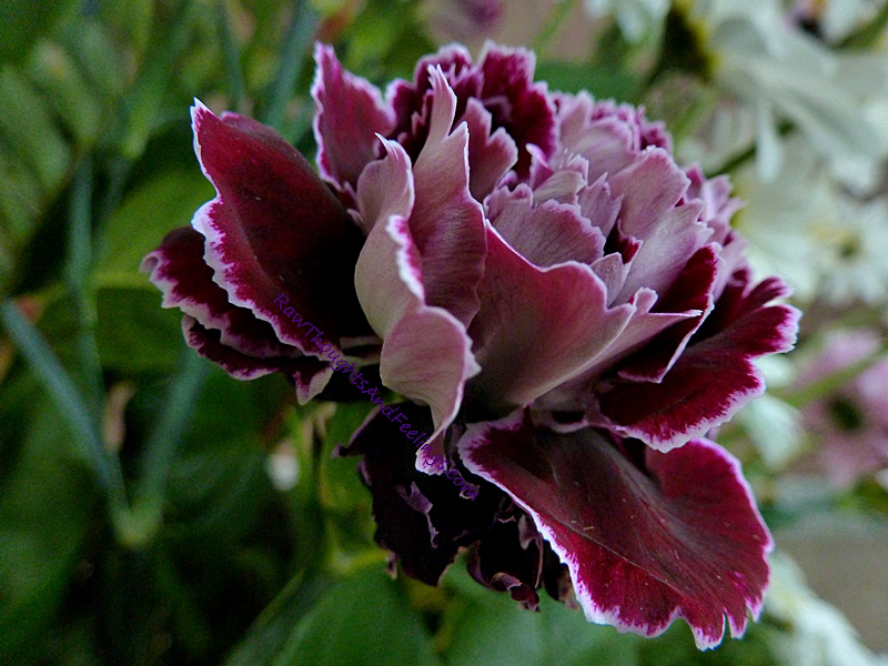 http://2.bp.blogspot.com/-WVhtabJadic/T_u1OnxJ_lI/AAAAAAAAADQ/0c4pqNwNB0M/s1600/Botany-carnations.jpg