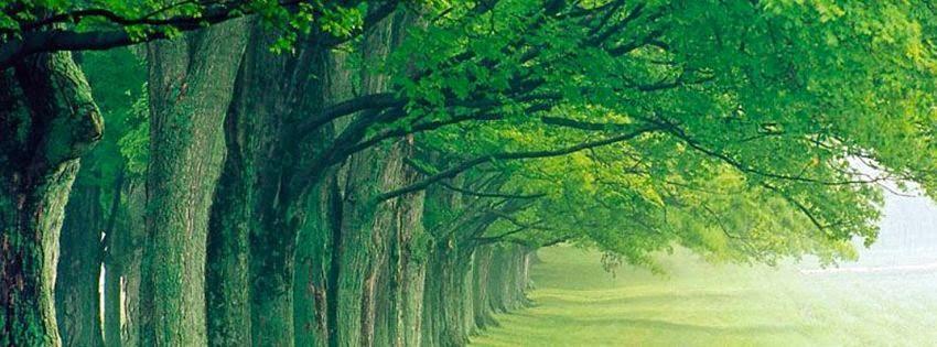 Couverture pour journal facebook HD nature verte