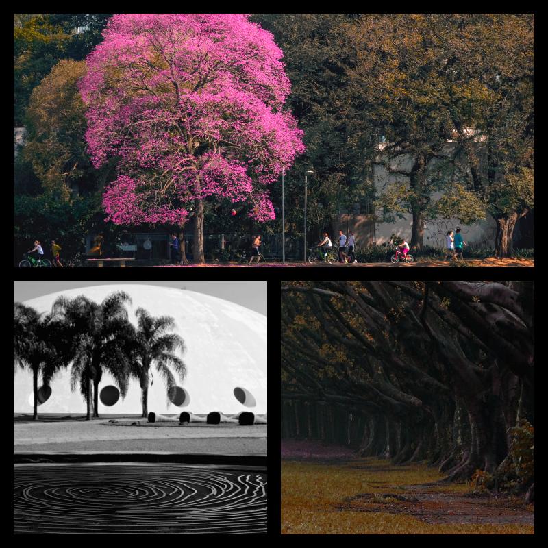 Parque do Ibirapuera en Sao Paulo