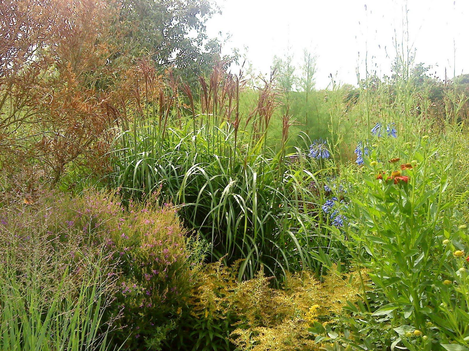 Grow laurel and hardy plants - Hardy houseplants ...