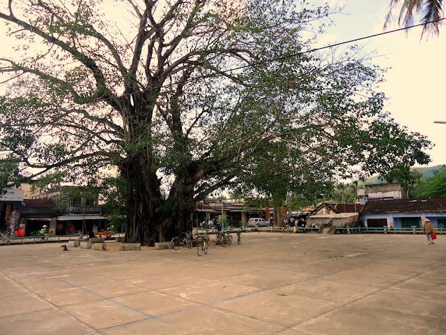 Cây đa chợ Xuân Lộc