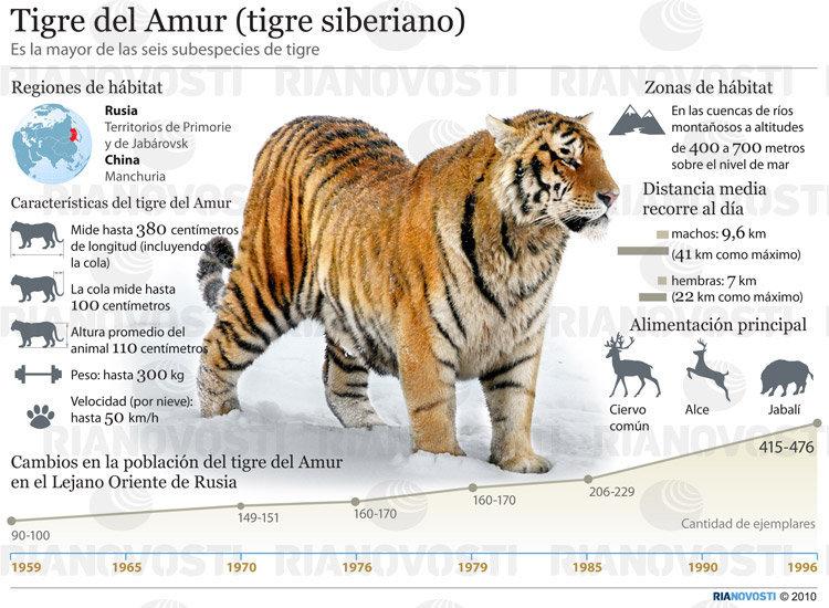 Tiger penis - Wikipedia
