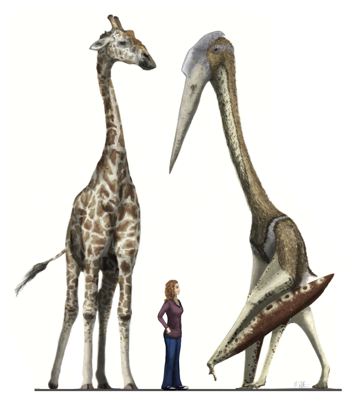 Hatzegopteryx Size Musings of a Clumsy Pa...