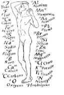 Funciones de los 20 aminoacidos esenciales