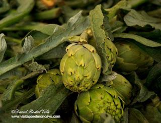 Jornadas Exaltacion verduras y fiesta de la verdura Tudela