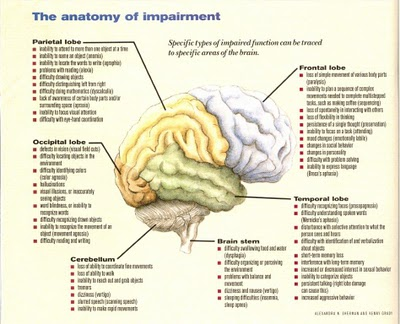 Brain Function1