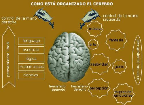 Arquitectura y feng shui yin yang cerebro - Arquitectura y feng shui ...