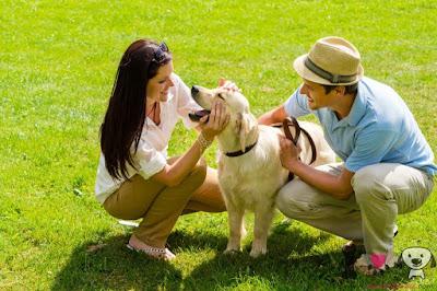 Dale cariño a tu perro