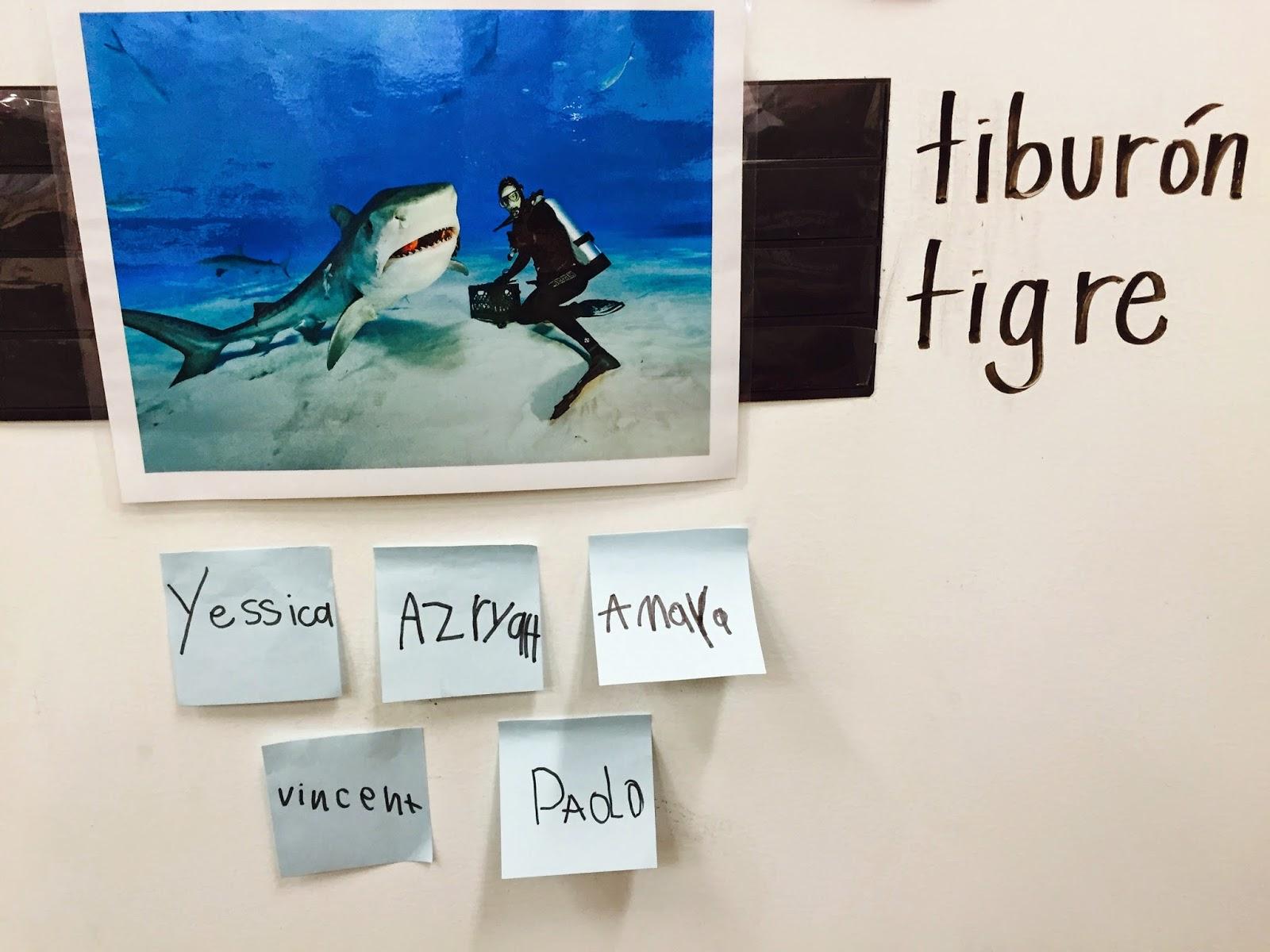 Q Significa Shark Maestra Roque: Sharks ...