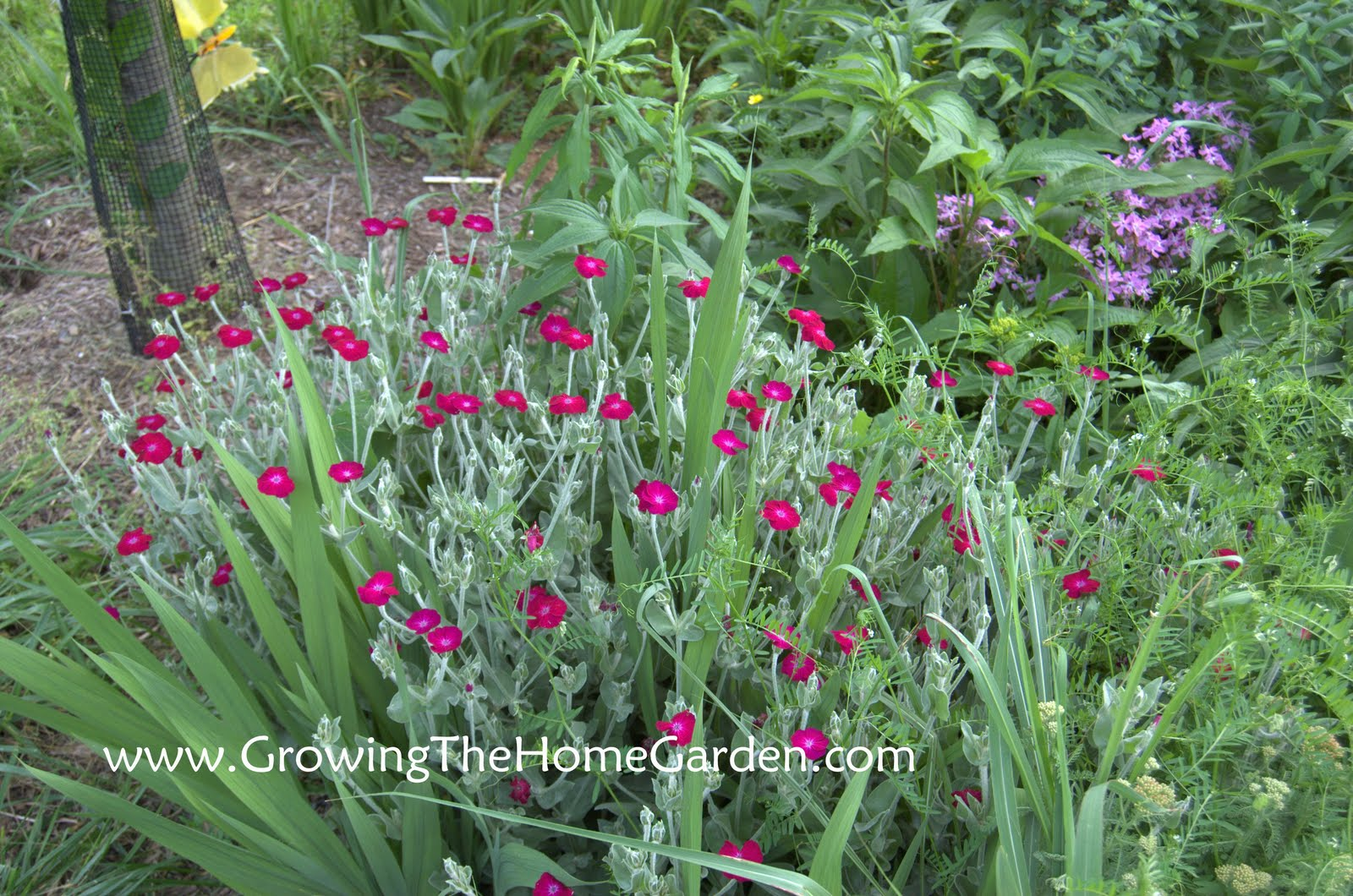 A few blooming may flowers growing the home garden - Flowers planted may complete garden ...