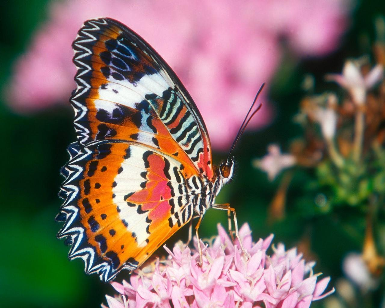Unique wallpaper exotic butterfly - Images de papillon ...