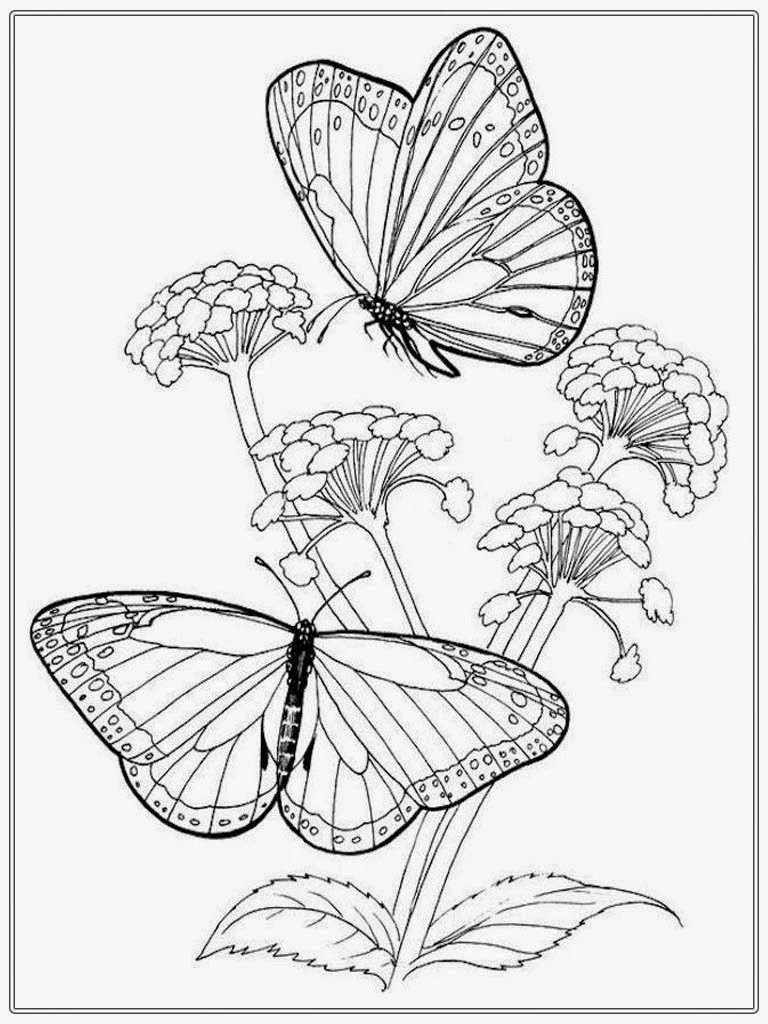 realistic butterflies coloring pages - photo#7
