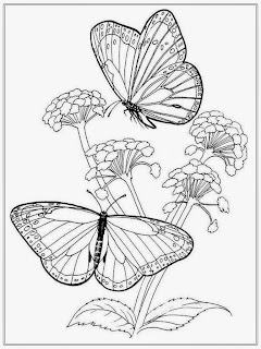 Butterfly's and Flower Coloring Pages For Adult