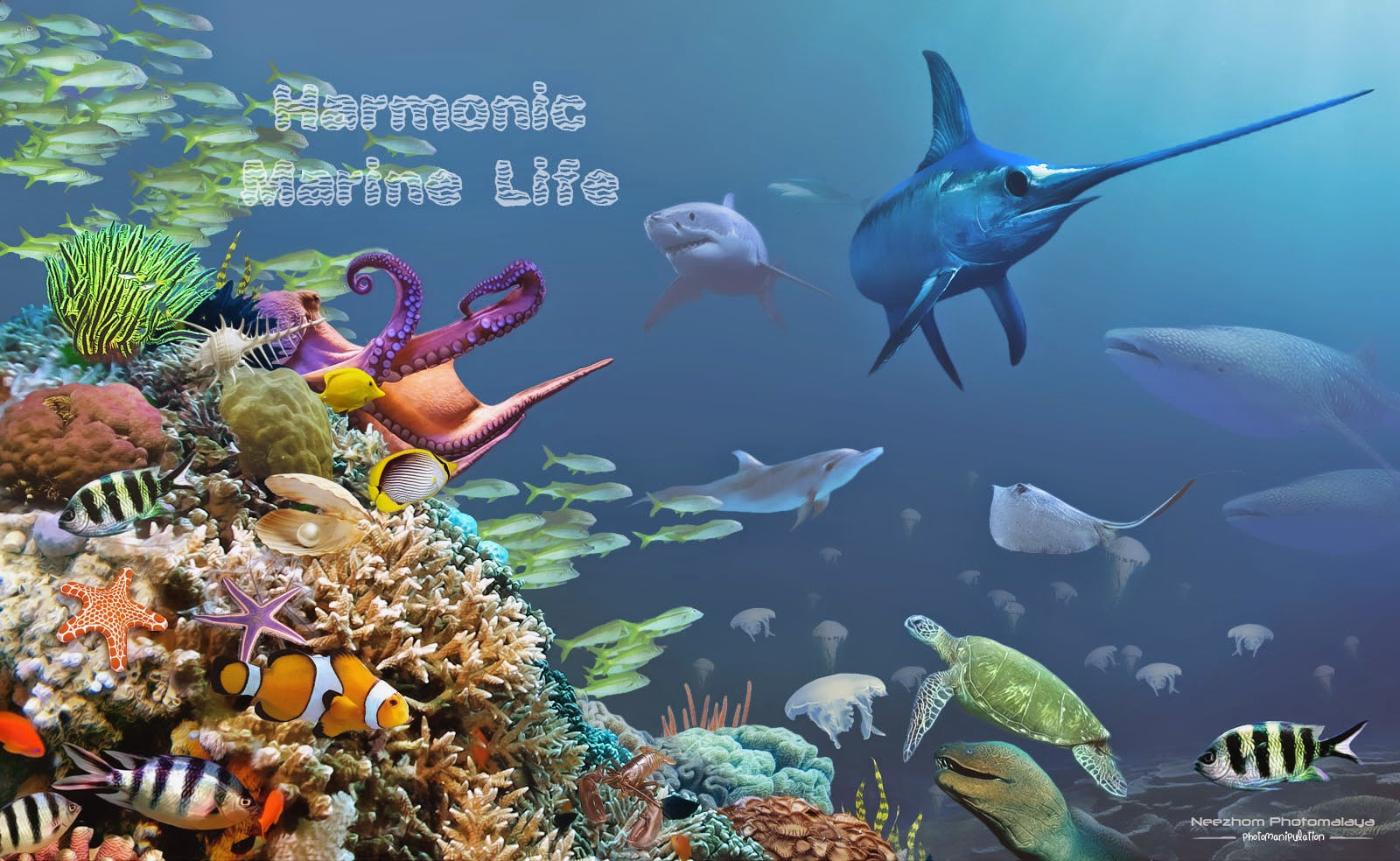 Harmonic Marine Life Photo manipulation wallpaper